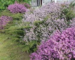 Allura Clean - entretien espaces verts